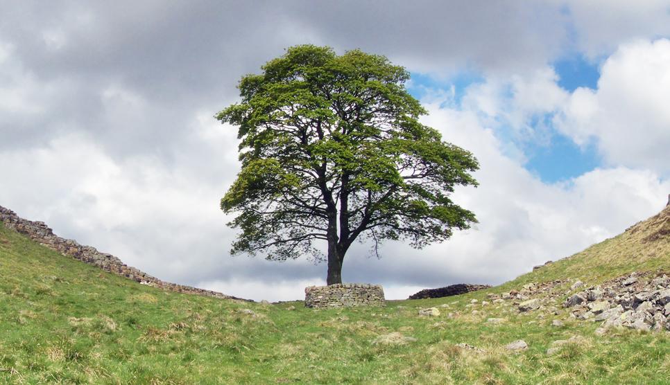 Sycamore Gap at Hadrian's Wall