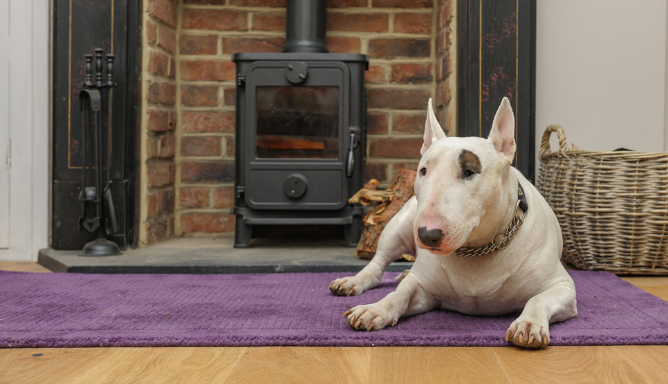 Dog relaxing in front of fire